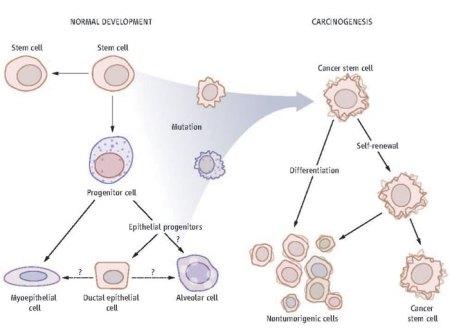 dangerous cells