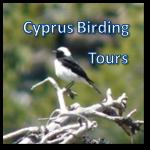 Cyprus Birding Tours